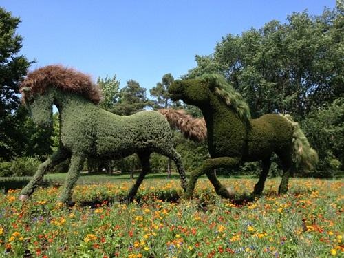 Les chevaux de l'homme qui plantait des arbres