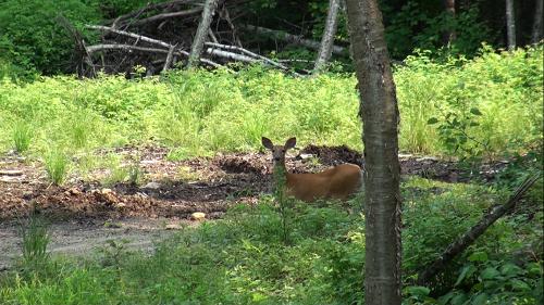 Coucou Bambi !