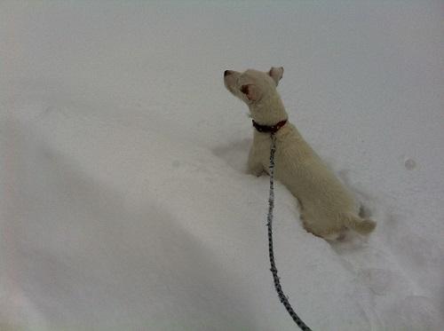 """""""Ah oui quand même. Y'a de la neige partout !"""""""