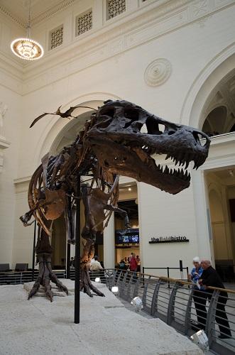 Sue le T-Rex au Field Museum